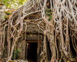 10 Intriguing Facts about Banyan Trees