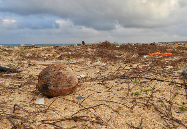 The loneliest coconut in Penghu.
